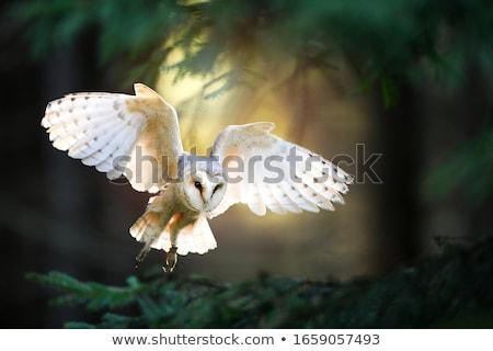 Gufo uccello preda cuore design arte Foto d'archivio © shawlinmohd