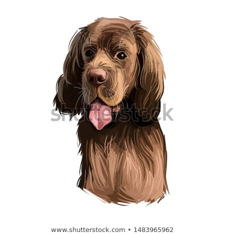 Gouden huisdier vrienden samen hond gelukkig Stockfoto © chrisga