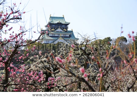 Stockfoto: Osaka · kasteel · pruim · bloesems · voorjaar · seizoen