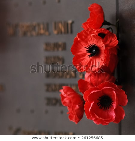memorial poppy on wall stock photo © silkenphotography