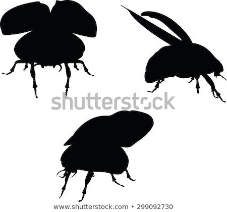 скарабей · жук · рисованной · эскиз · иллюстрация · дизайна - Сток-фото © istanbul2009