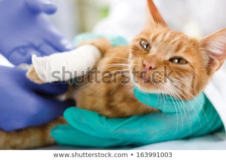 Veterinario gatos pierna oficina mujer trabajo Foto stock © wavebreak_media