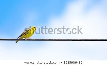 bird standing on wire fence stock photo © giko