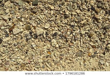 seashell on stone seacoast Stock photo © Paha_L