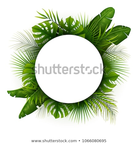 Tropical leaves background with white round banner. Palm,ferns,monsteras. Vector illustration Stock photo © gladiolus
