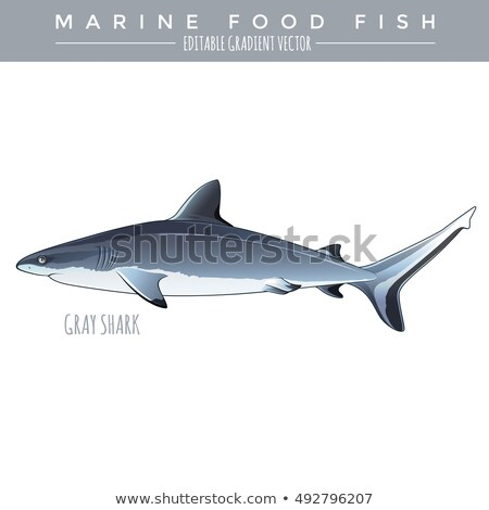 Gris requin marines alimentaire poissons illustration Photo stock © ConceptCafe