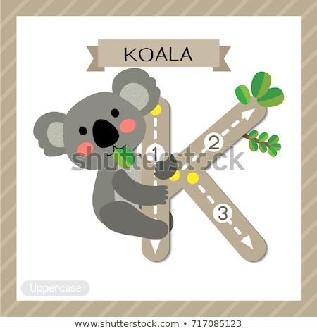 flashcard letter k is for koala stock photo © bluering