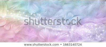 rainbow feather Stock photo © blackmoon979