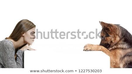 Herdershond witte studio donkere dier Stockfoto © AvHeertum