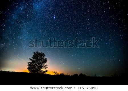 Illuminated trees an night sky with stars Stock photo © manfredxy