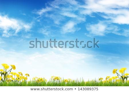 Gele bloemen blauwe hemel hemel gras abstract zomer Stockfoto © rufous