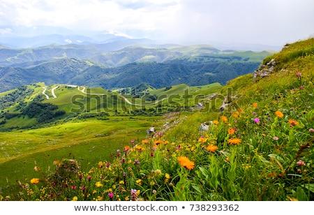 tavaszi · virágok · hegyek · első · fű · természet · tájkép - stock fotó © kotenko
