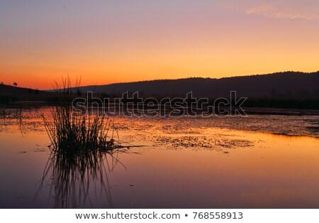 Penrith Wetlands Stock photo © lovleah
