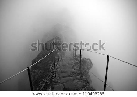 деревья тумана черно белые фото пейзаж Сток-фото © umbertoleporini