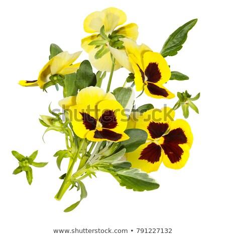 lila · fehér · makró · szelektív · fókusz · központ · virág - stock fotó © melnyk