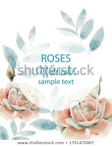 Cartão rosa bege rosas pálido azul Foto stock © TasiPas
