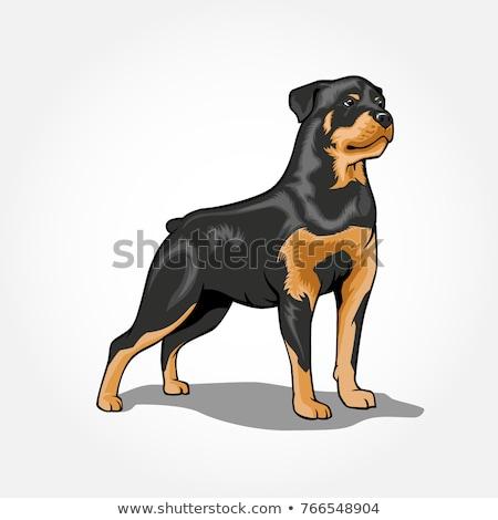 Cartoon rottweiler alimentaire illustration bol animaux Photo stock © cthoman