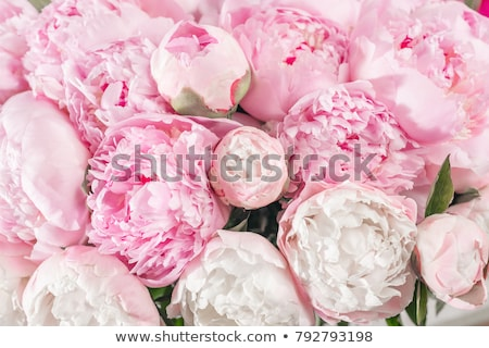 Fresh bouquet of white and pink peonies and flower petals on a gray concrete background with copy sp Stock photo © artjazz