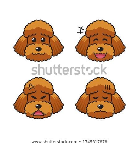 Cartoon Poodle Bored Stock photo © cthoman