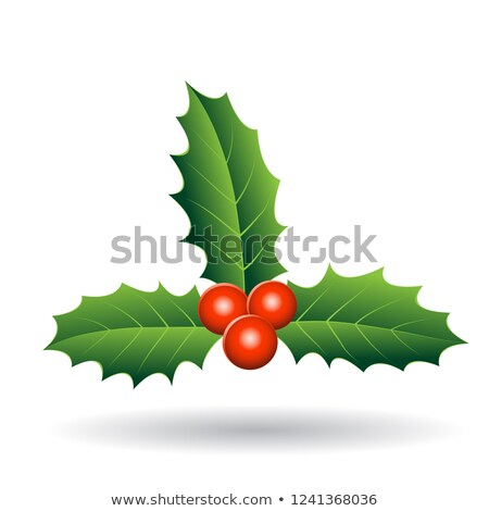 Holly Berries with Seperate Green Leaves Vector Illustration Stock photo © cidepix