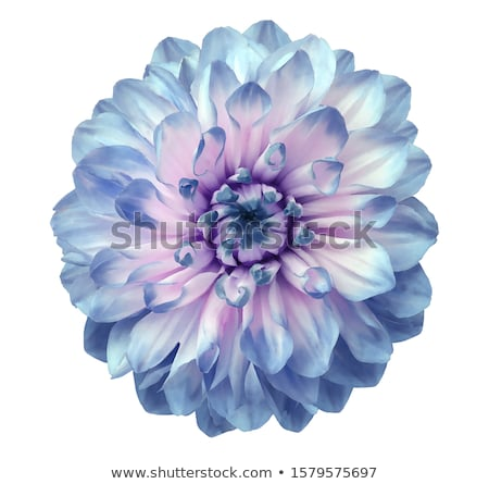 Bright pink and blue flowers Stock photo © neirfy