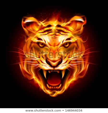 Flaming Tiger  Head Icon Stock photo © patrimonio