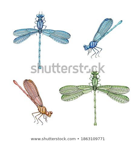 Dragonfly Flying Drawing Side Stock photo © patrimonio