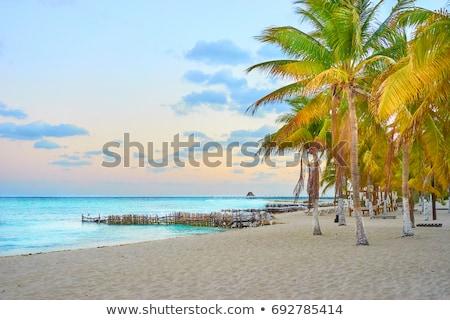 Caribbean North beach palm trees Isla Mujeres Mexico Stock photo © lunamarina