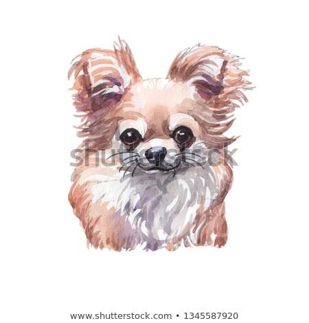 cachorro · poodle · preto · estúdio · mamífero · dois - foto stock © adrenalina
