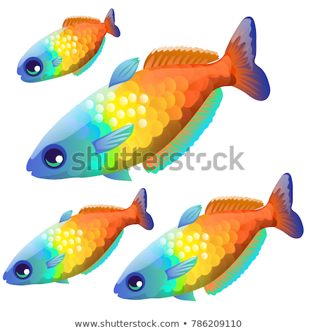 the growth stage of fancy fish with colorful scales isolated on a white background cartoon vector c stock photo © lady-luck