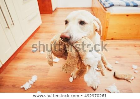 Suçlu köpek komik evcil hayvan pop art Retro Stok fotoğraf © studiostoks