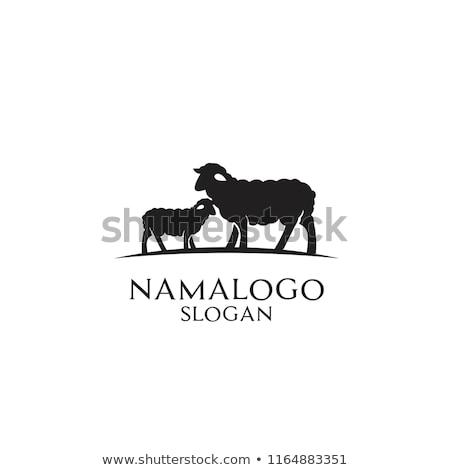 Cordero logo ovejas silueta texto parrilla Foto stock © FoxysGraphic