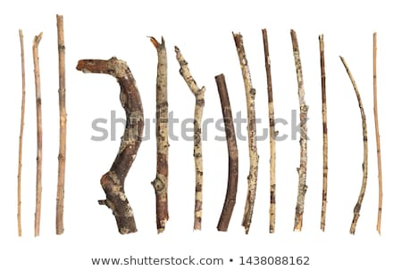 Wooden tree branch frame stock photo © colematt