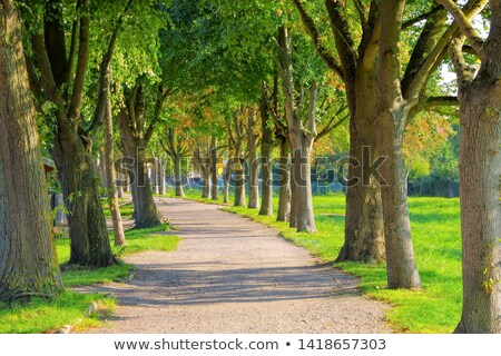 near the town Barth landscape with old lime tree avenue Stock photo © LianeM