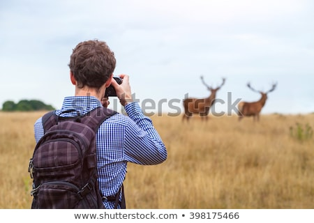 Photographer photographs deer in nature Stock photo © barsrsind