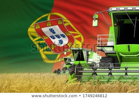 Combine harvesting wheat in portuguese field. Stock photo © inaquim