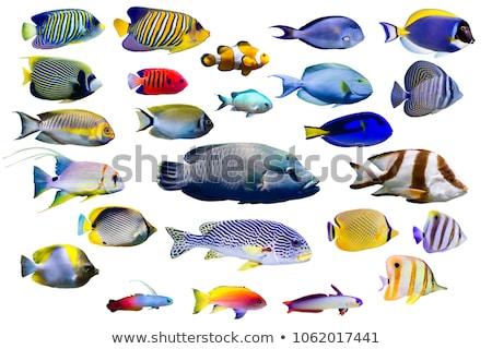蝶 · 魚 · 海 · スイミング · 水 · 美 - ストックフォト © Laracca