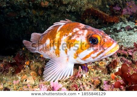 泳ぐ · 魚 · 海 · 美 · オレンジ · 海 - ストックフォト © Laracca