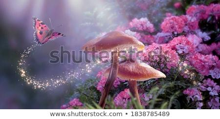 fantasia · flor · crescente · rochas · isolado · branco - foto stock © Shevlad