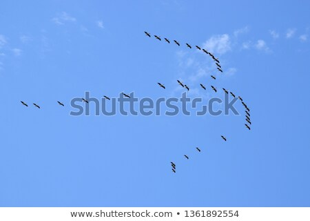 Flying · белый · озеро · Африка - Сток-фото © igabriela