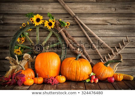 still life of pumpkins on cart stock photo © phbcz
