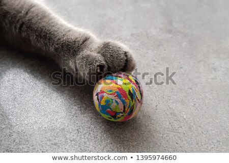 British kitten playing with earth Stock photo © vlad_star
