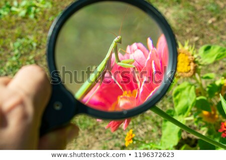 Leaf of a plant under the magnifying glass Stock photo © a2bb5s