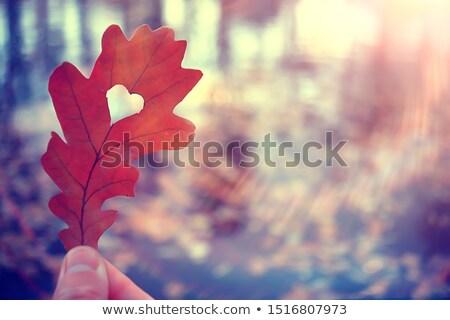 Heart of Oak Stock photo © suerob