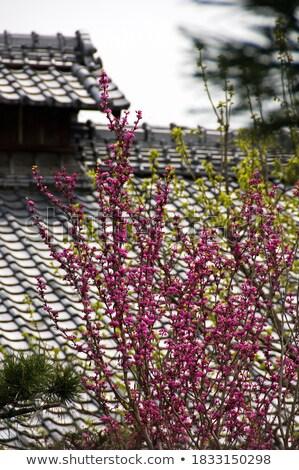 ピンク · タイル張りの · 屋根 · テクスチャ · 抽象的な · ホーム - ストックフォト © deyangeorgiev