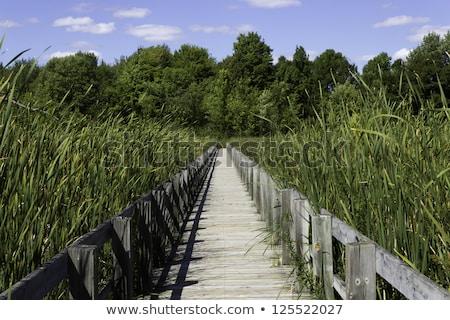 madeira · natureza · verde · caminho · trilha · pântano - foto stock © bigjohn36