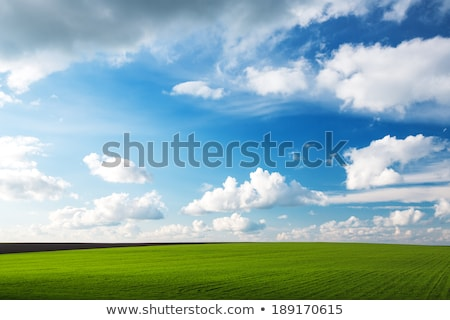 Pszenicy zbiorów niebo horyzoncie złoty Błękitne niebo Zdjęcia stock © Lightsource