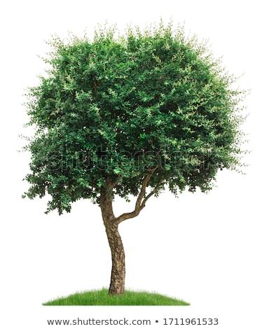 cork oak 20 Stock photo © LianeM