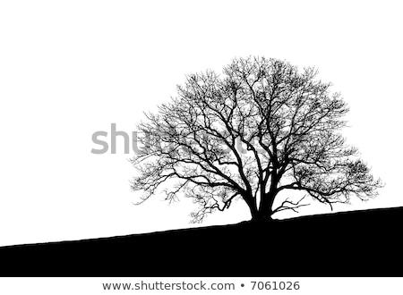Gedetailleerd silhouet boom natuur Stockfoto © koqcreative