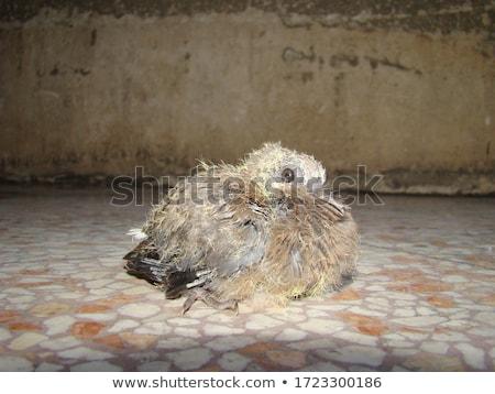 Dog returns from vet Stock photo © cteconsulting